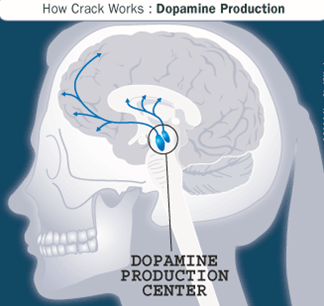 Effects of Crack on the Brain